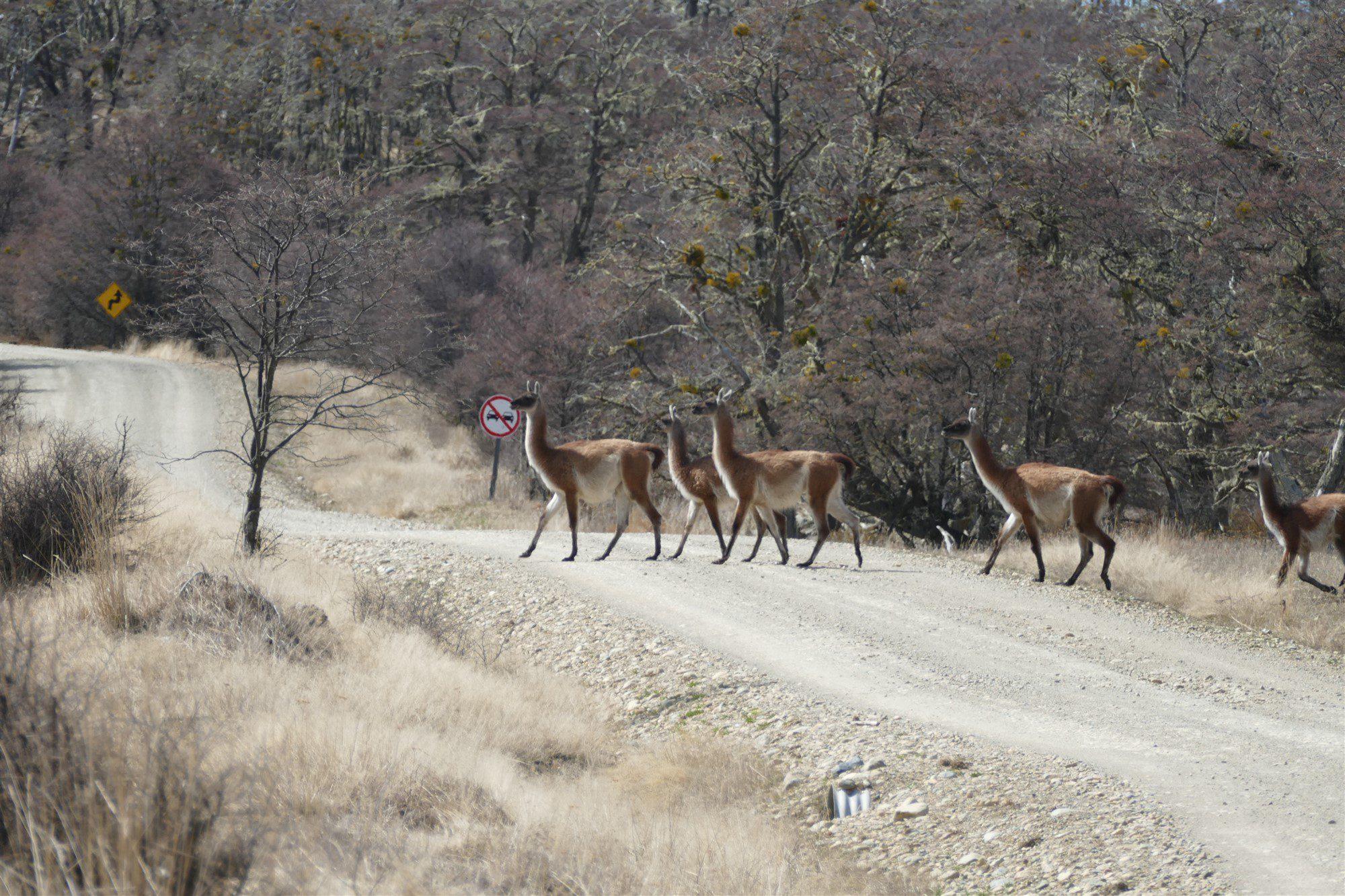 Roadtrip Tierra del Fuego