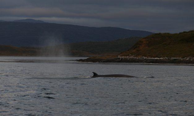 Walvissen en wind