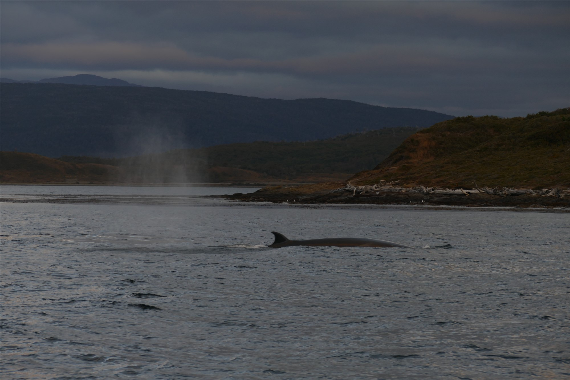 Whales at Estrecho de Magallanes