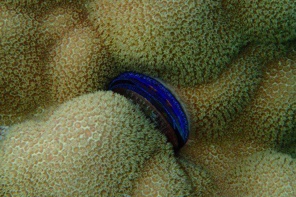 Coral & Shells in Amanu