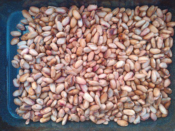 Cacaobeans