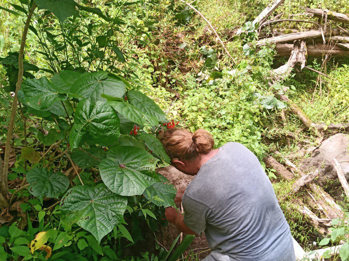 Pepers plukken in de Marquesas