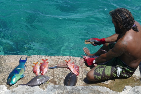 Cleaning fish at the dock of Katiu
