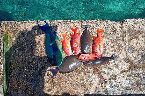Fishing in Katiu